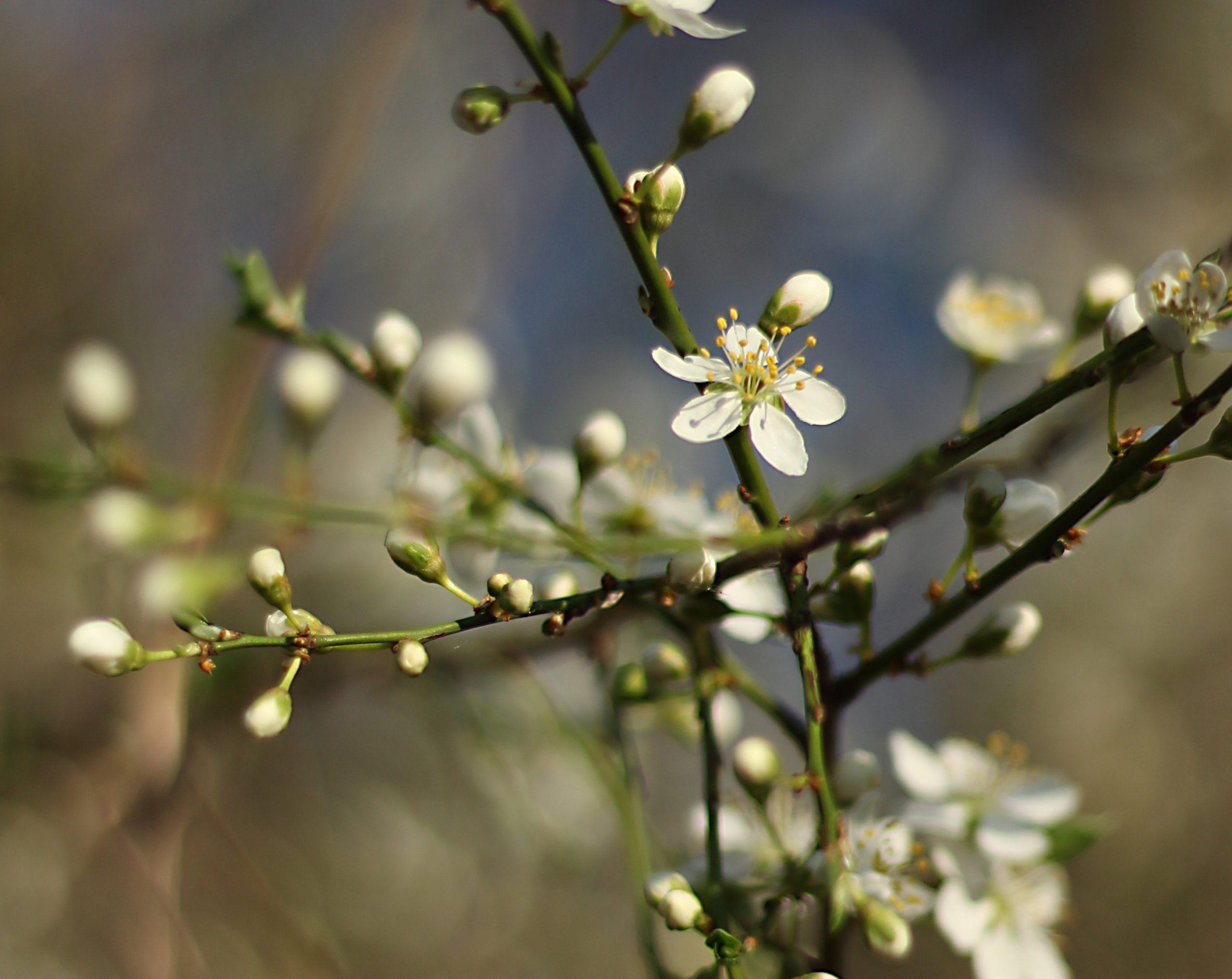 Dve hiljade dvadeseto proleće u Srbiji
